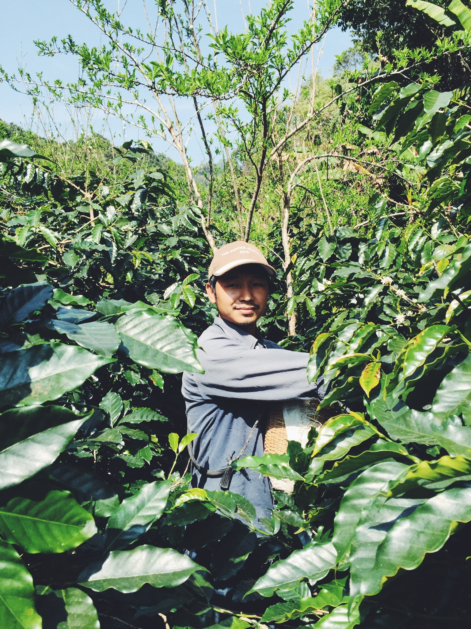 Lee Ayu, the owner of Akha Ama, picking coffee cherries on his farm.