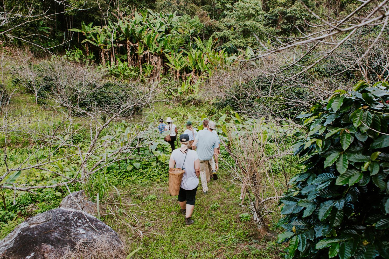 Walking to Betu and Anusorn's coffee farms