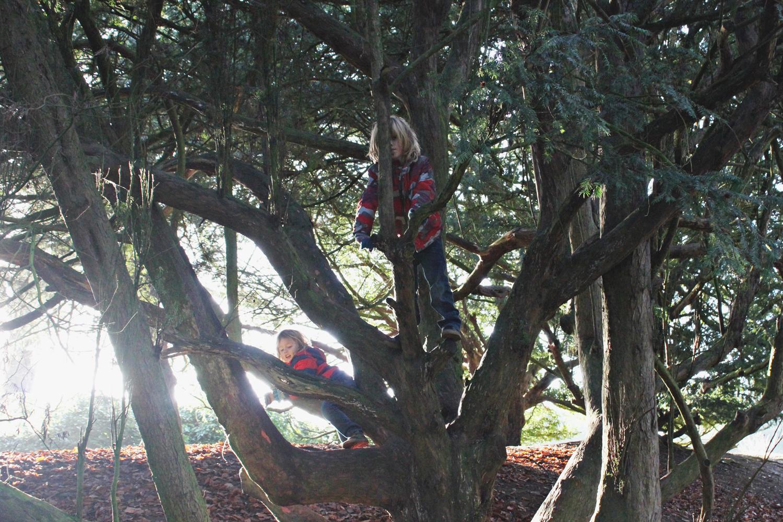 waddesdon-manor-tree-climbing.jpg