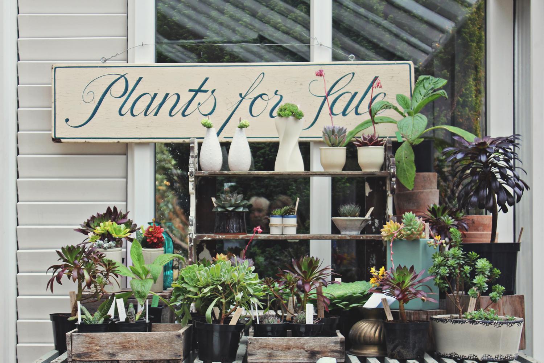 potager-cafe-plants