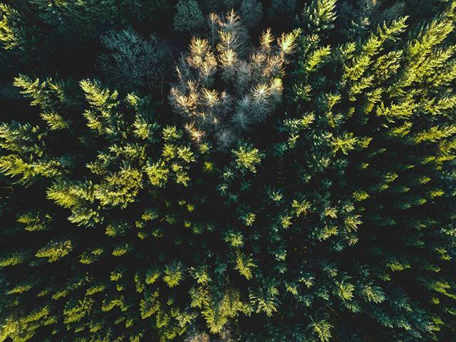 Everything is prettier from above . . . . . H O M E . D U M F R I E S & G A L L O W A Y . S C O T L A N D . . . . #canon #canoneos5dmkii #houseoftones #properadventure #outsideculture #landscape #greatnorthcollective #modernoutdoors #weventureout #wildernessculture #outdooradventures #keepitwild #agameoftones #trailmagazine #scotlandisshit #visitscotland #ig_scotland #scotlandexplore #lovescotland