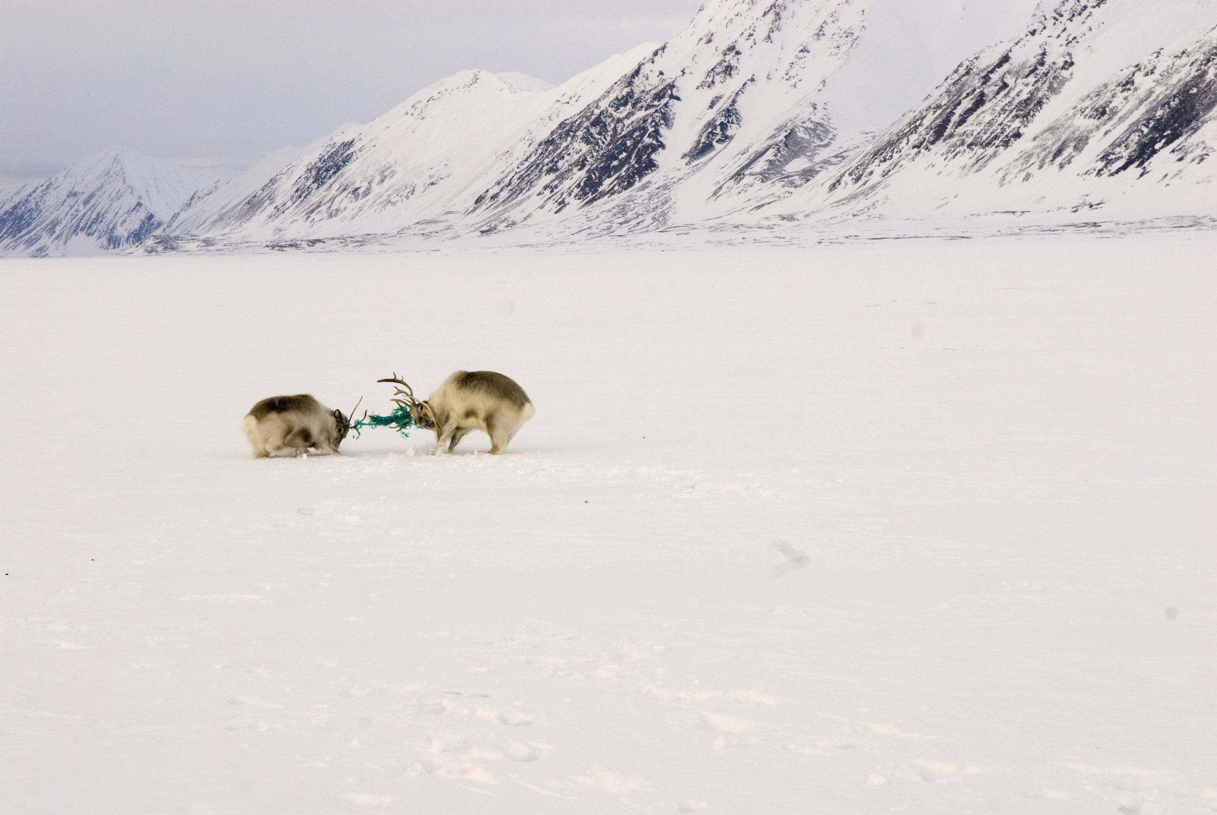 Sveinung Bertnes Råheim, Svalbard