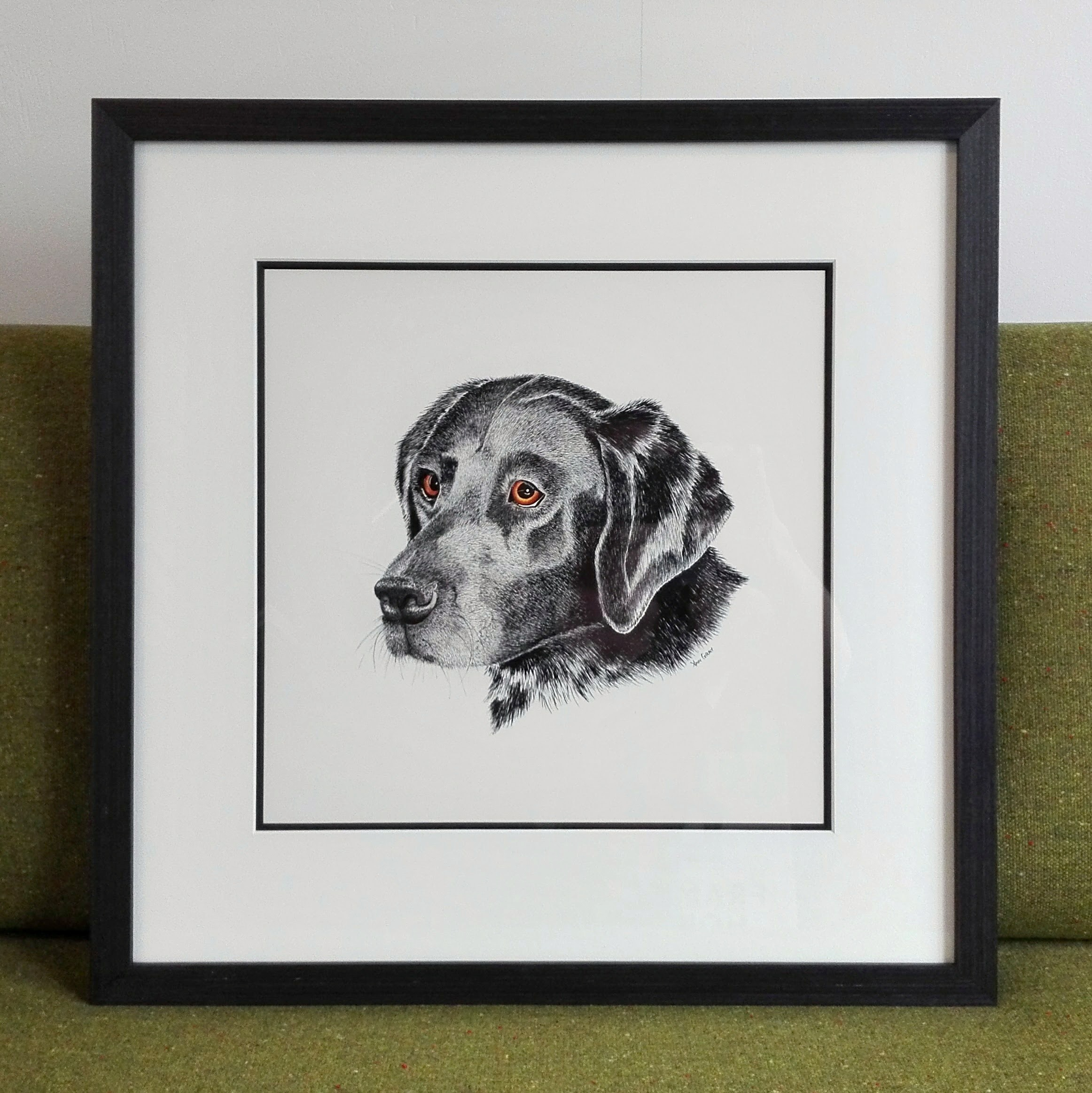 Black Labrador drawing by Ann Gray