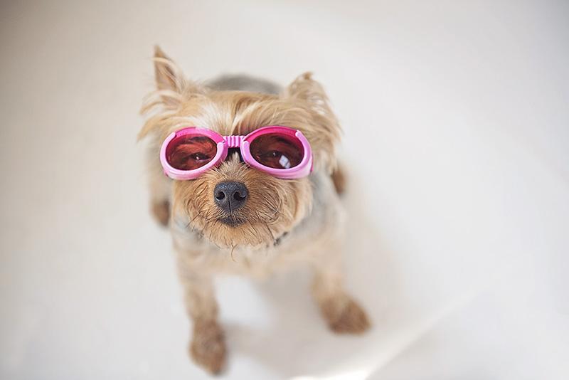 Blog — Puppy Breath PhotographyPuppy Breath PhotographyPuppy