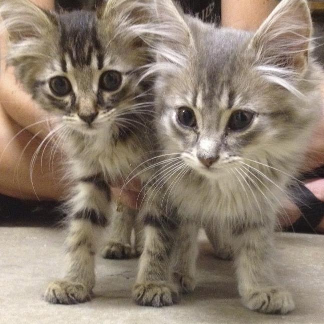 kittens-IMG_2049.jpg