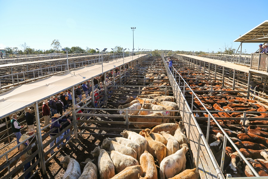 Roma Saleyards TOURS AVAILABLE.jpg