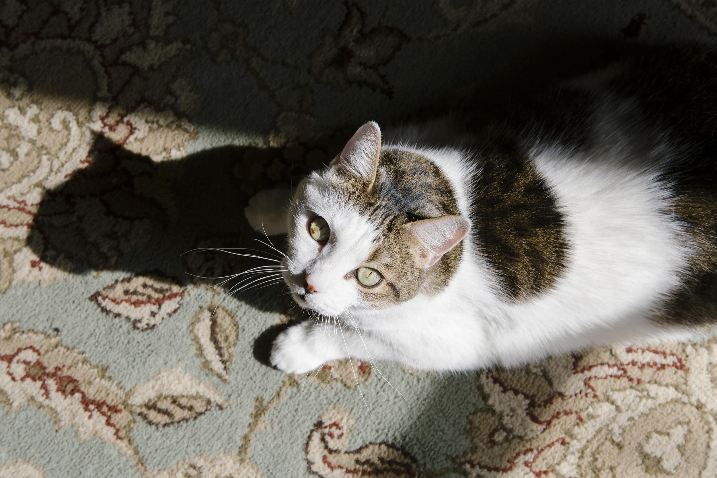 Roxanne's cat Dylan.