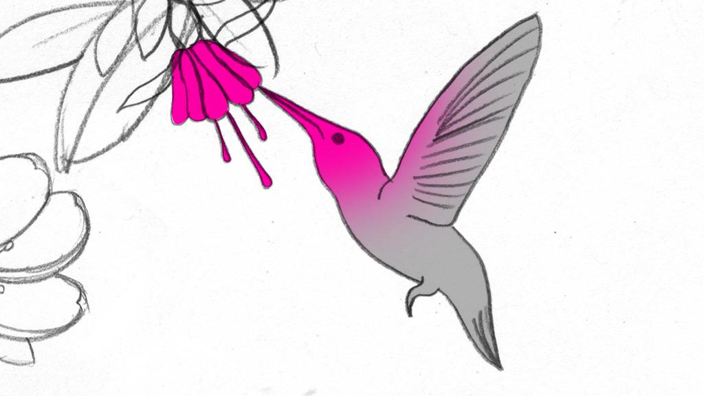 abc2_sboard_bird_fr01.jpg
