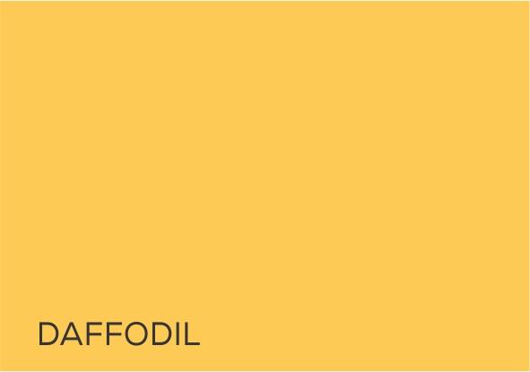 16 Daffodil.jpg