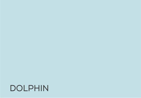 3 Dolphin.jpg
