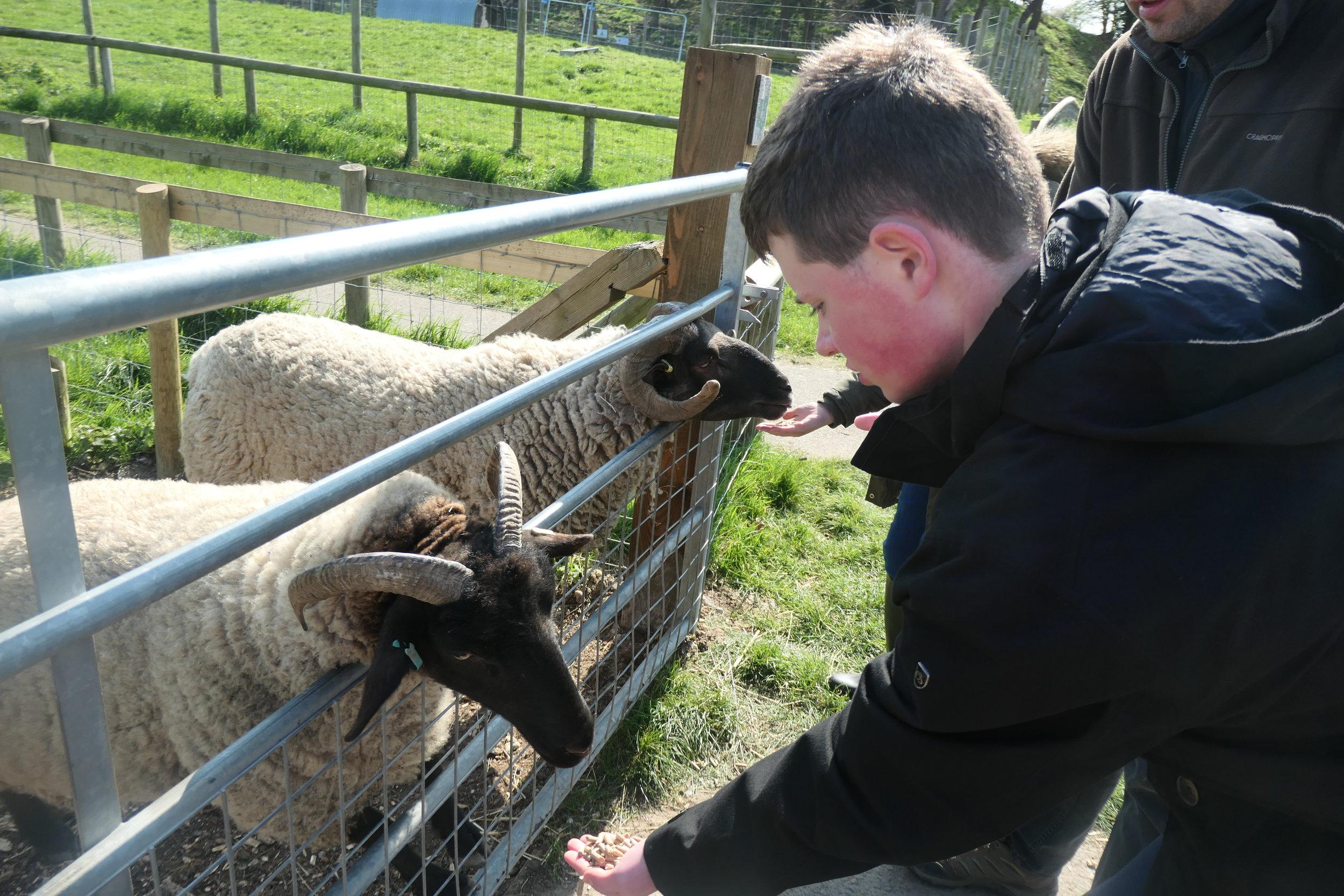 MP Hadleigh Farm 1.jpg