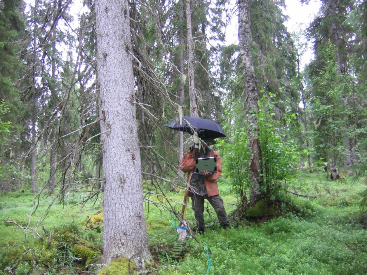 Полевые работы с георадаром велись в дождливую погоду.