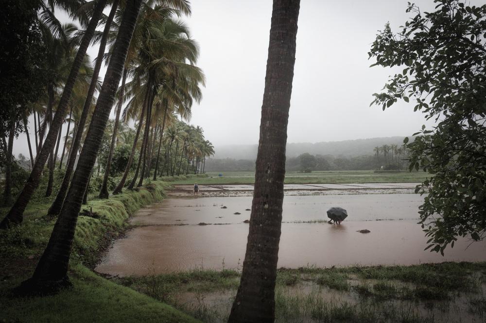 monsoon field s.jpg