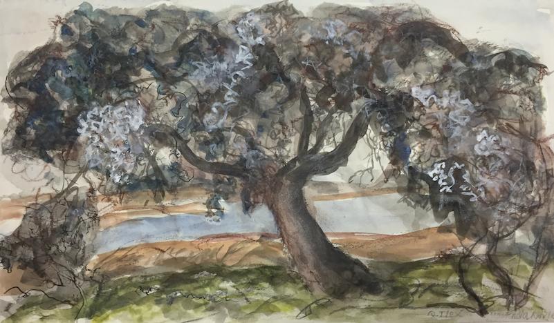 Quercus Ilex, We Are All Nature Markadia II