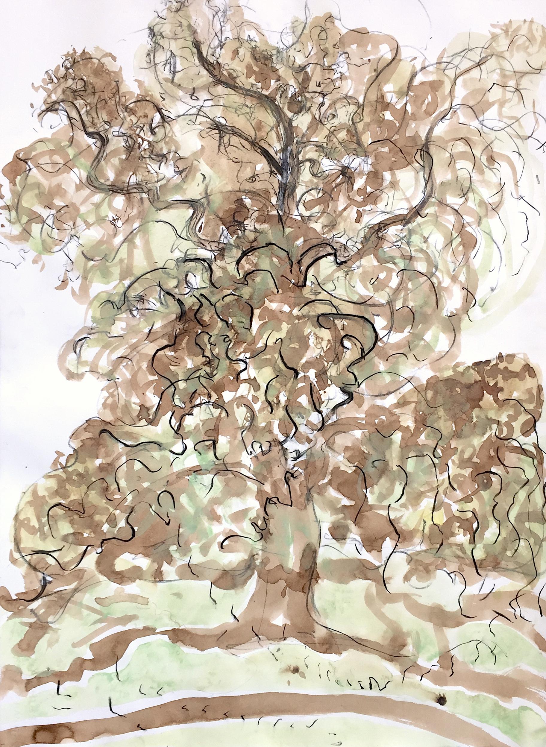 Platanus × Acerifolia Study I