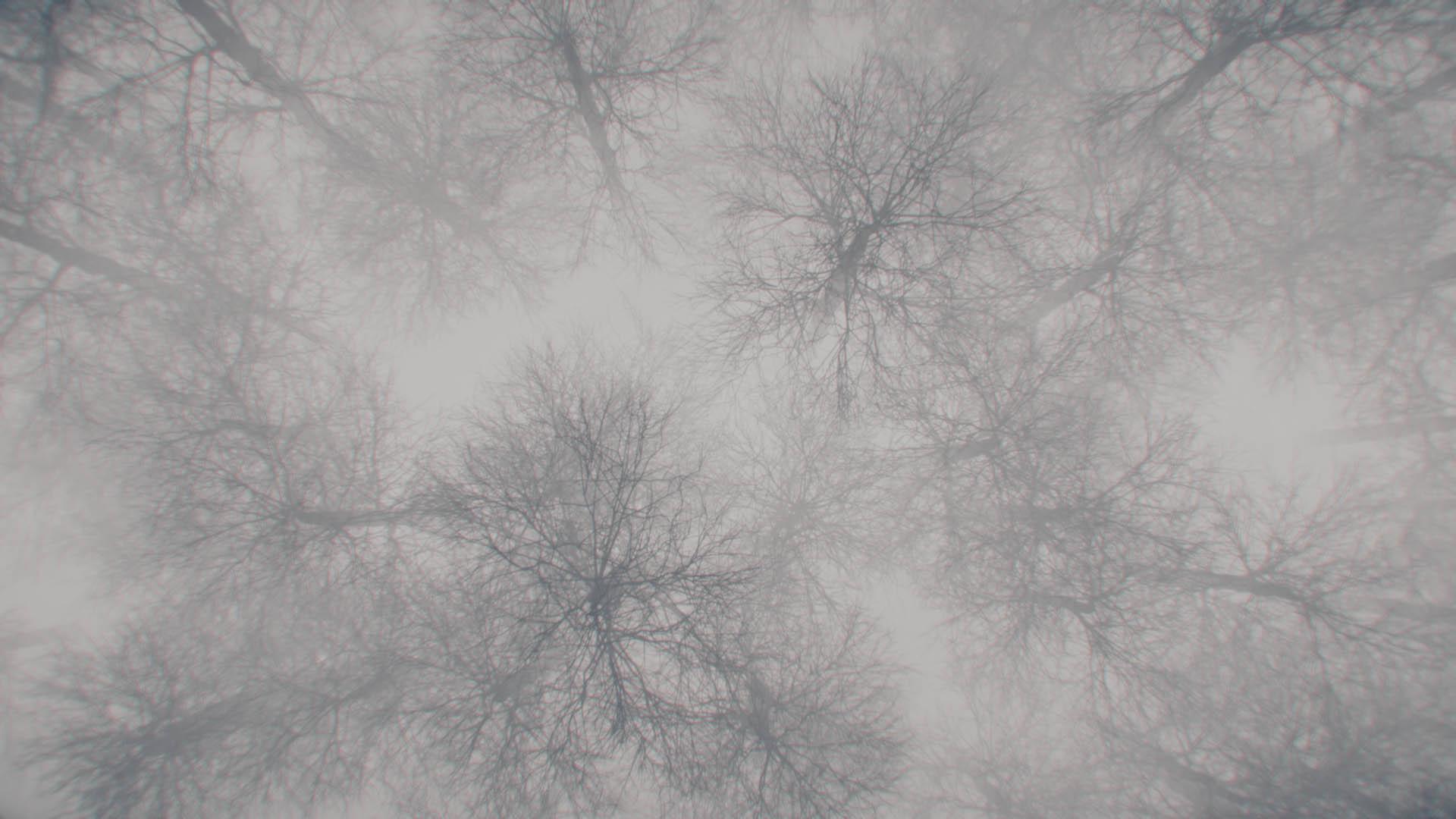 Seq_Forest top view V1_Frame copy.jpg