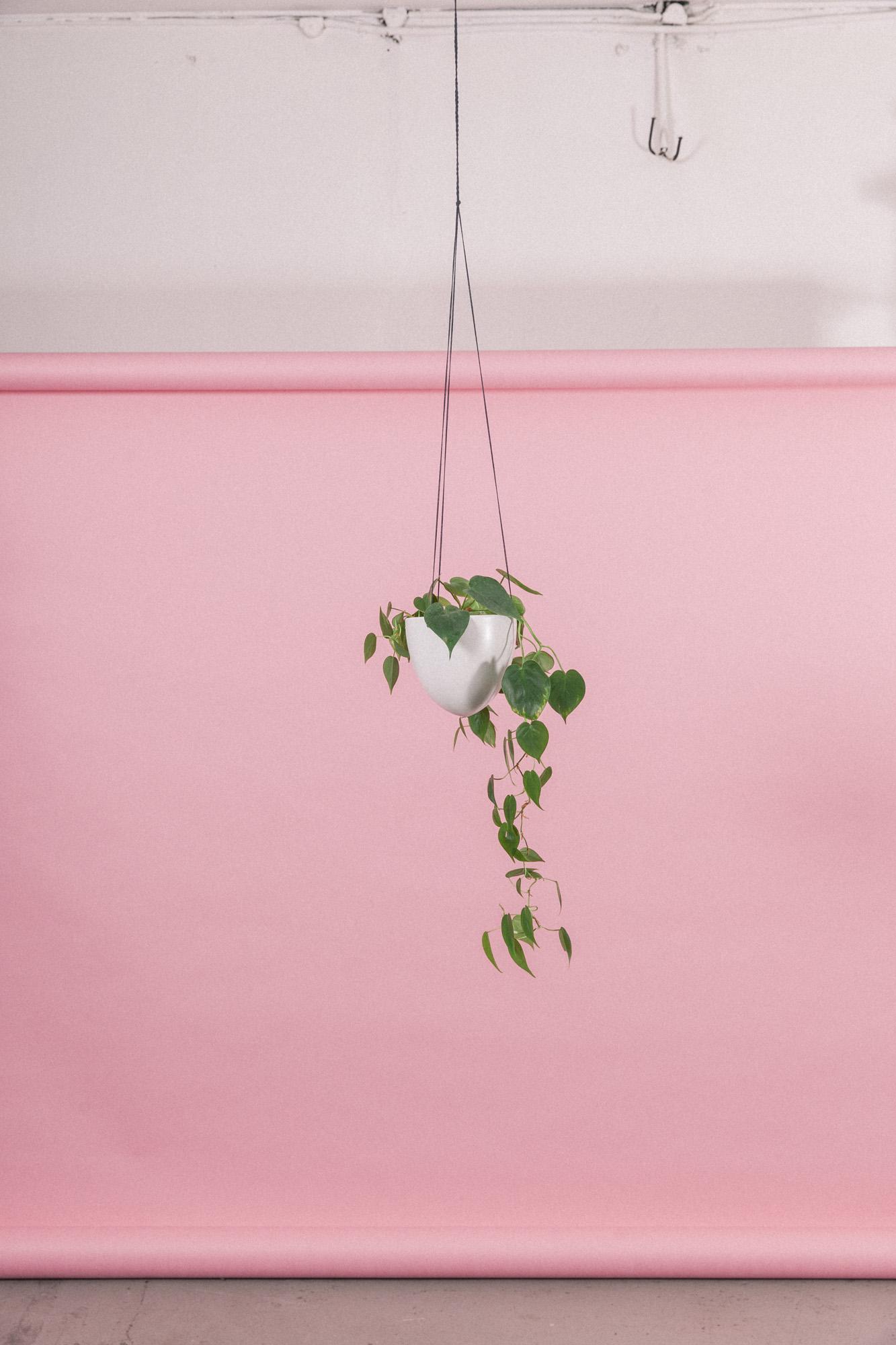 plantemagasinet gro philodendron scandens