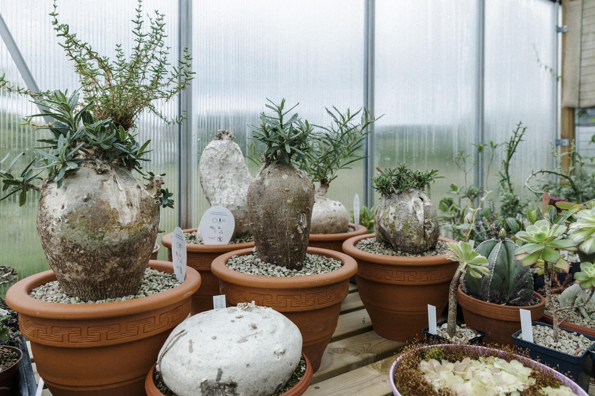 plantemagasinet gro solheim gartneri caudex