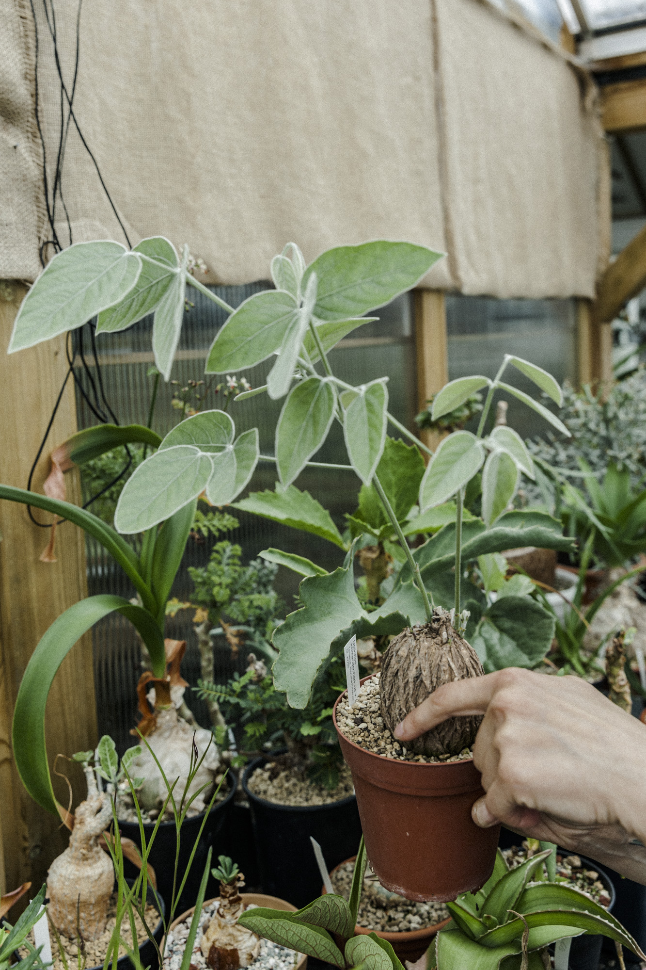 plantemagasinet gro solheim gartneri