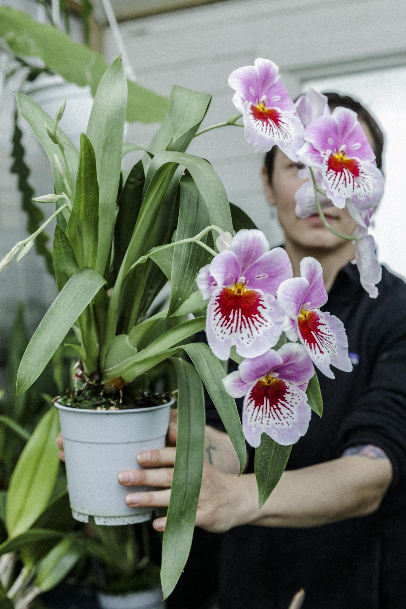 orkide plantemagasinet gro solheim gartneri