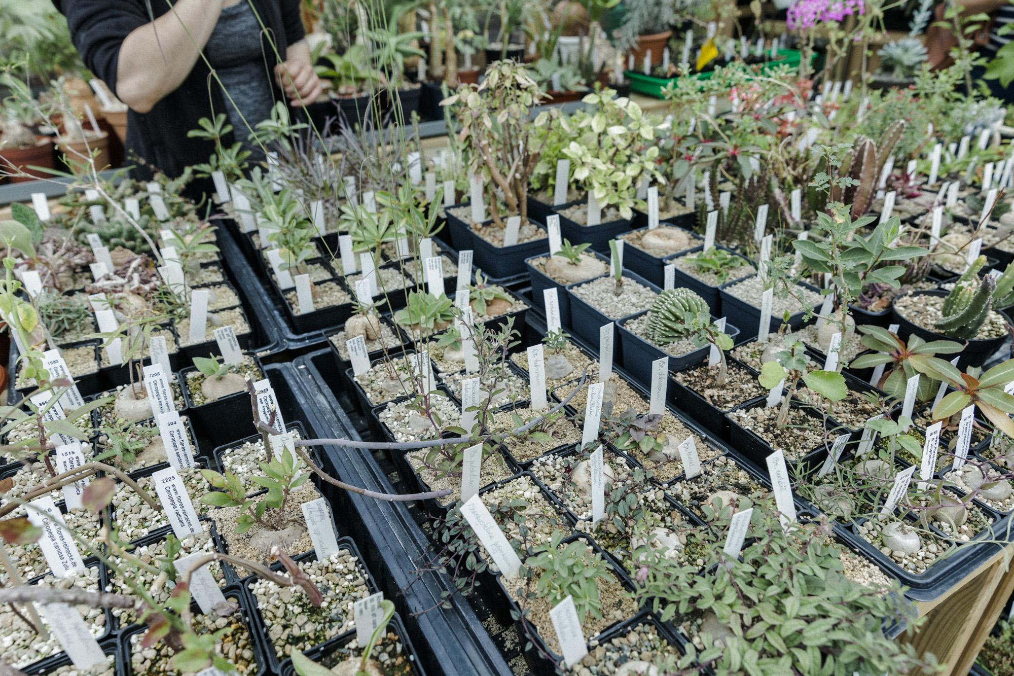 solheim gartneri plantemagasinet gro