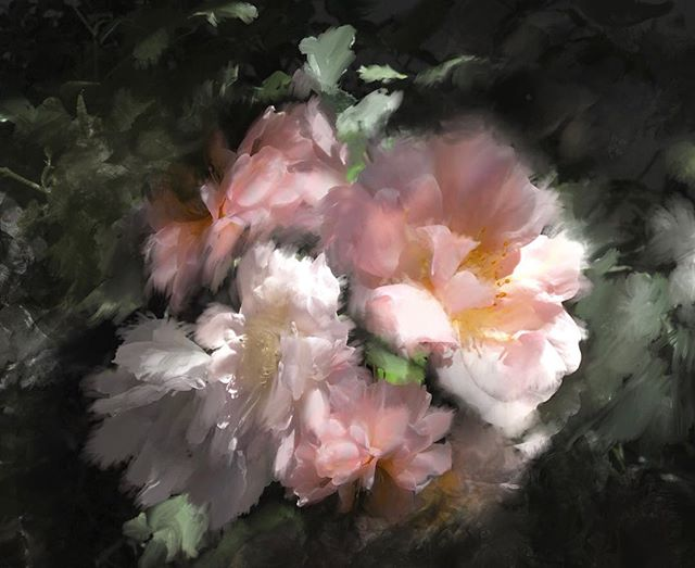 Fun with photo manipulation and a little bit of digital paint over. #roses #photomanipulation #flowers #procreateapp
