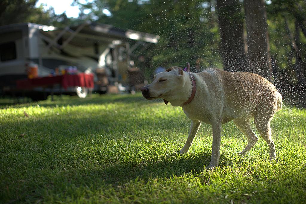 Dog Shaking Water Type C Web.jpg