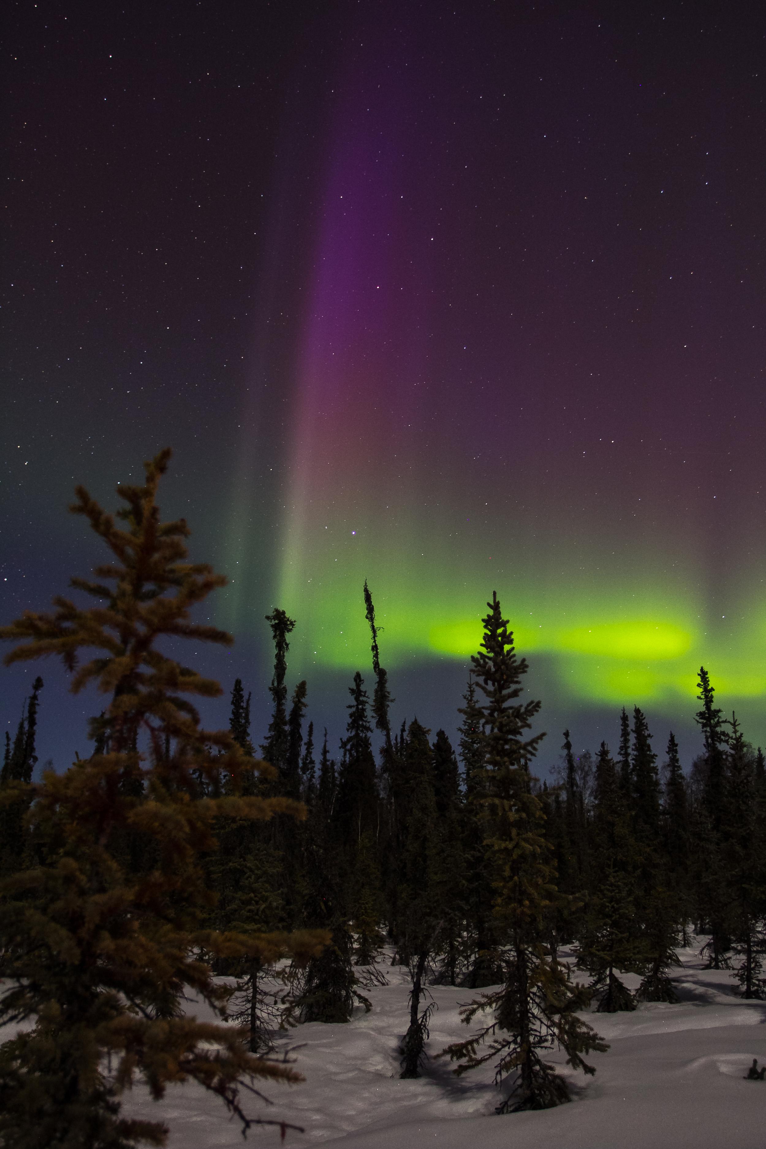Spruce Aurora