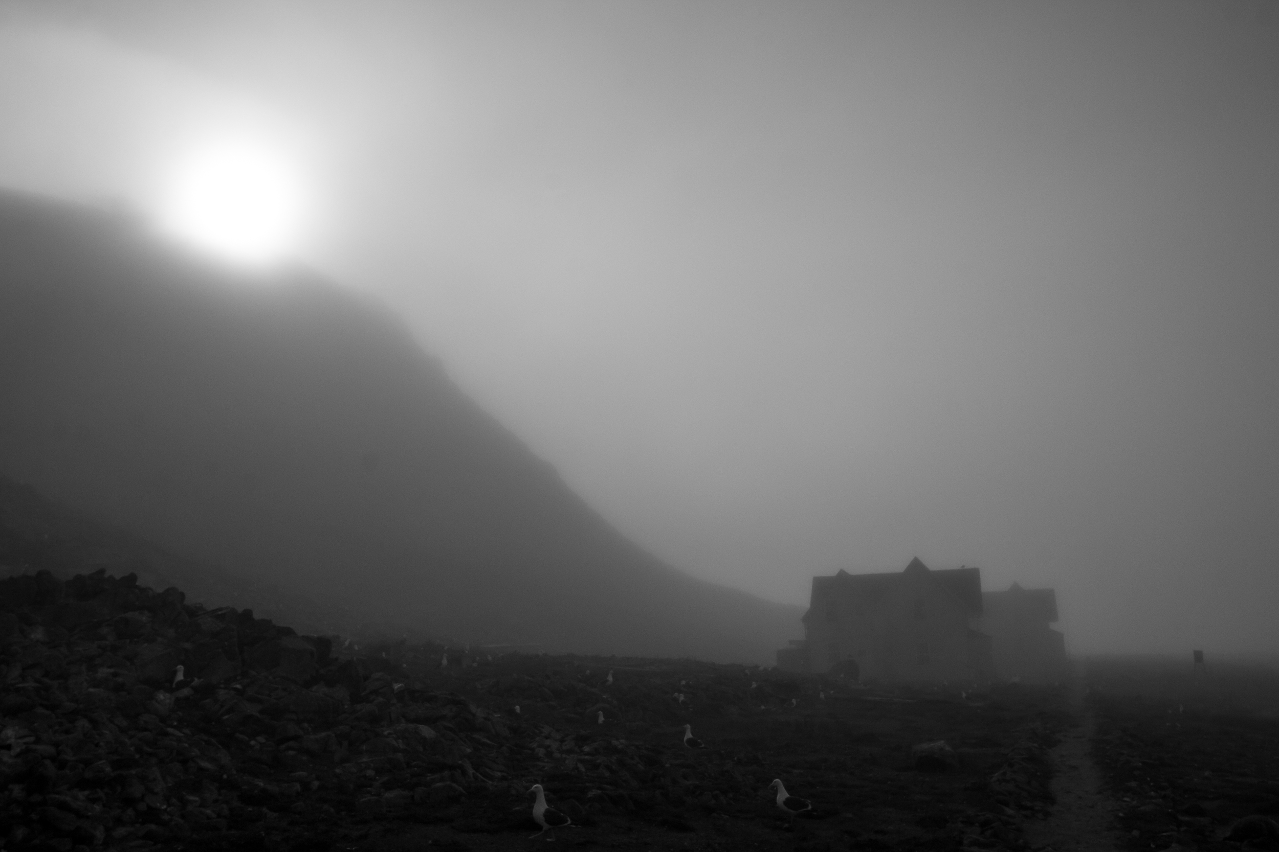 Farallones Fog