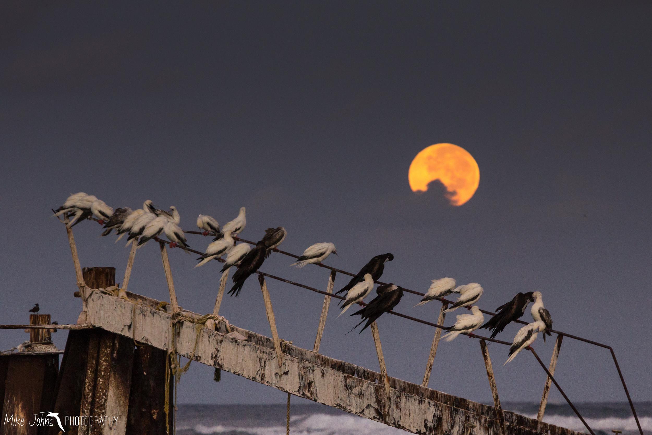 Booby Moon