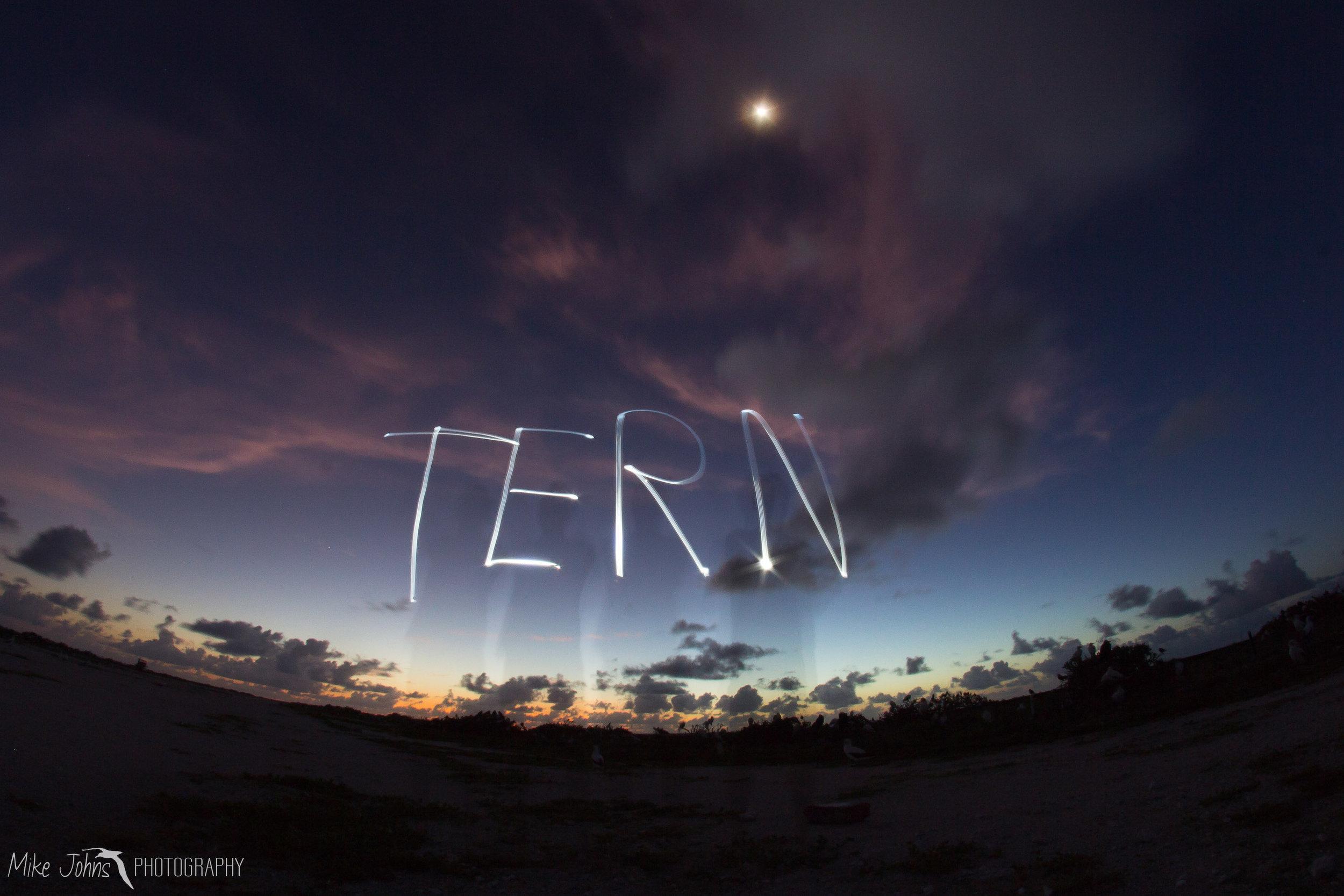 tern2012-8562.jpg
