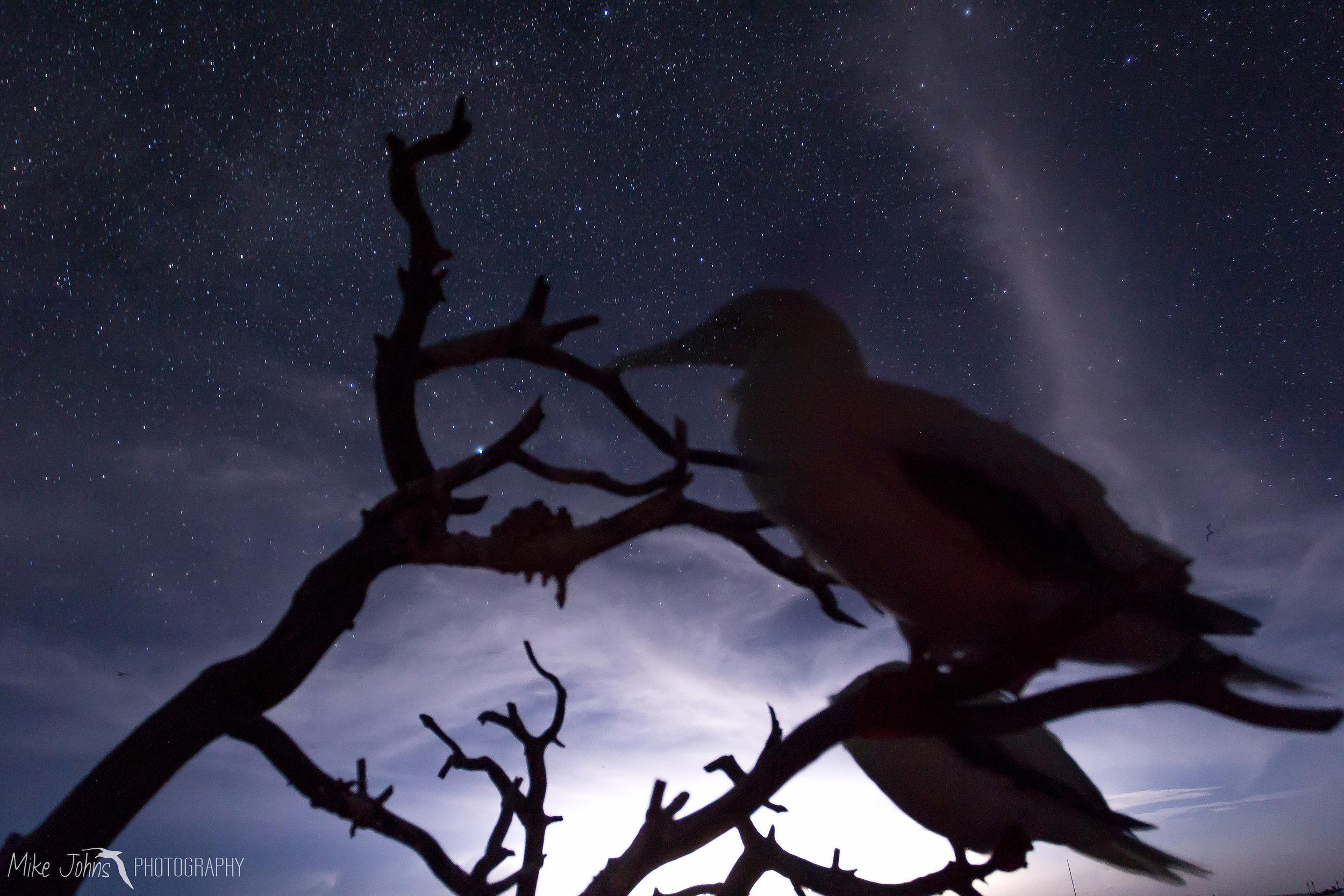tern2012-0155.jpg