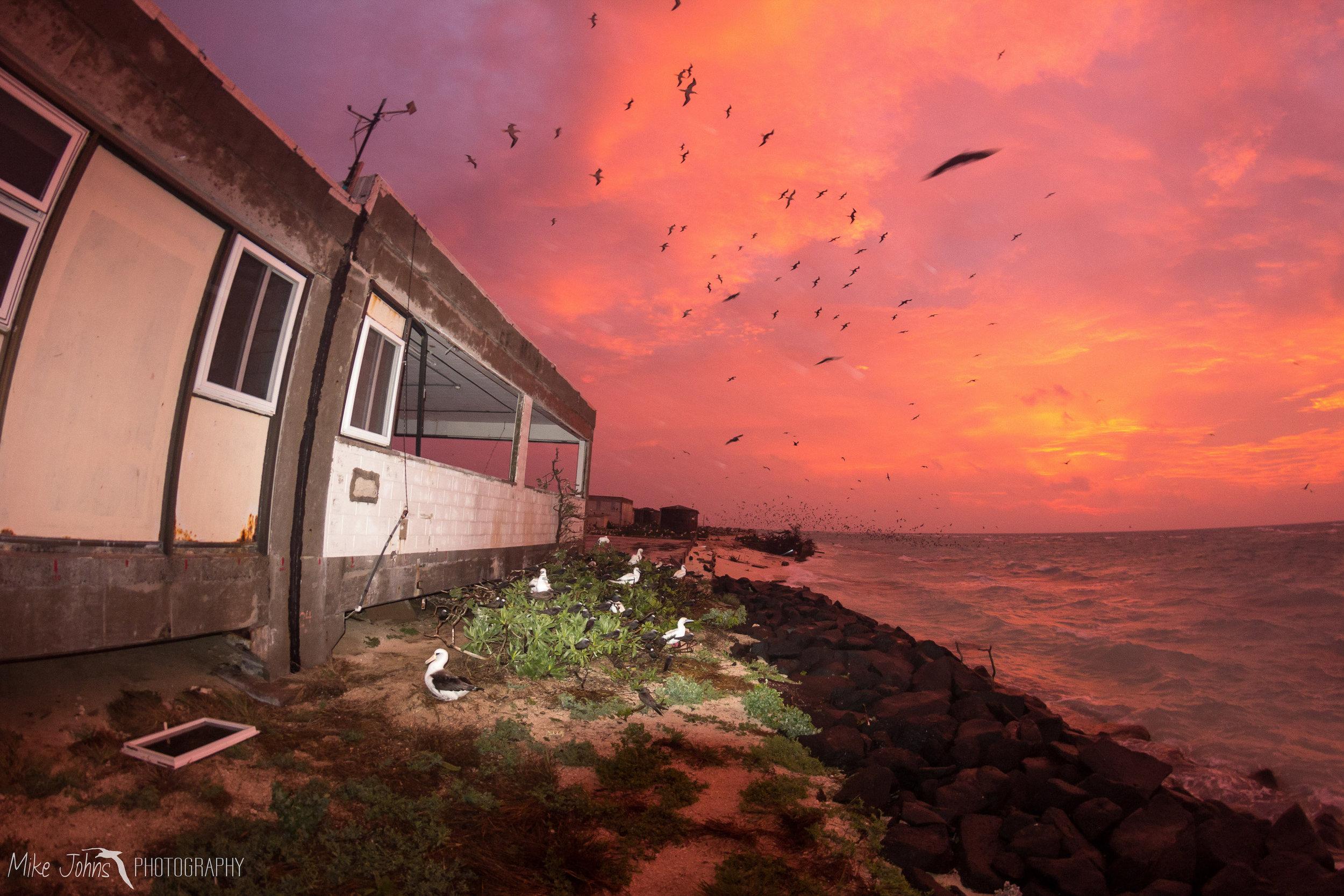 tern2012-0461.jpg