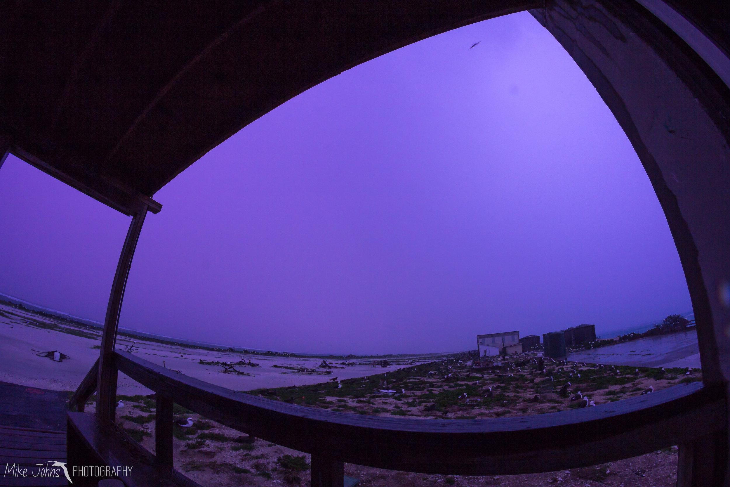 tern2012-0365.jpg