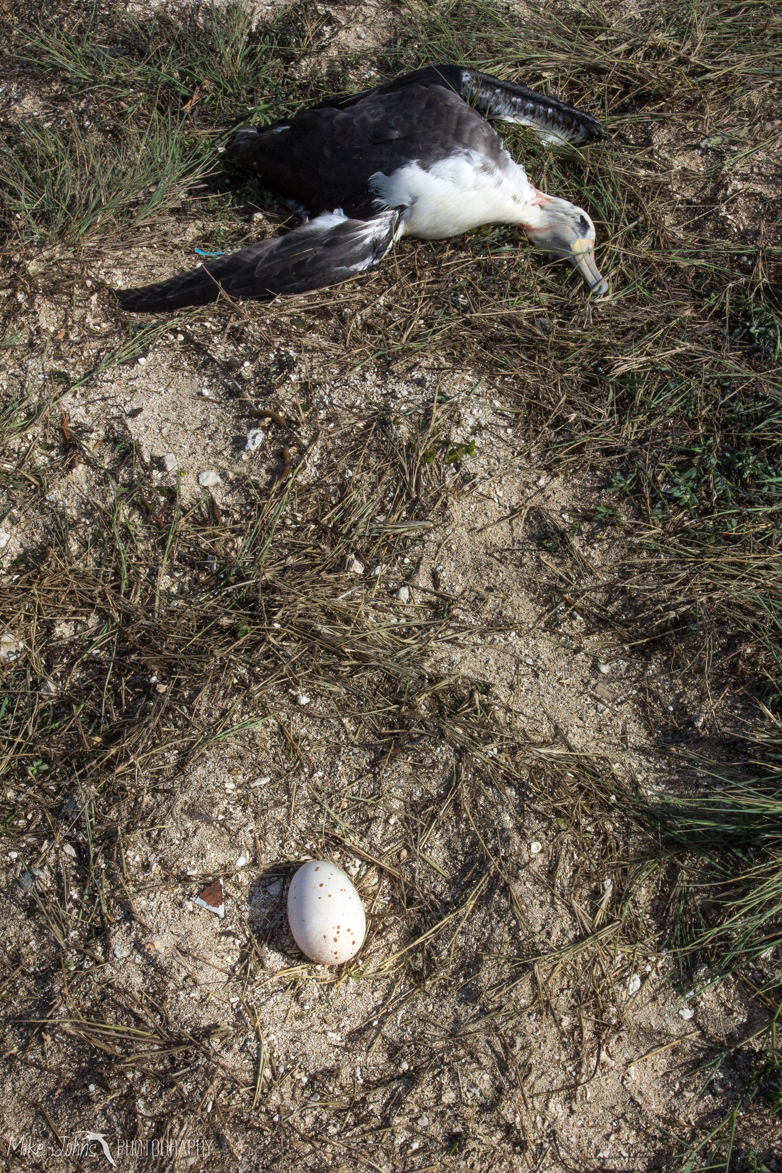 tern2012-0709.jpg