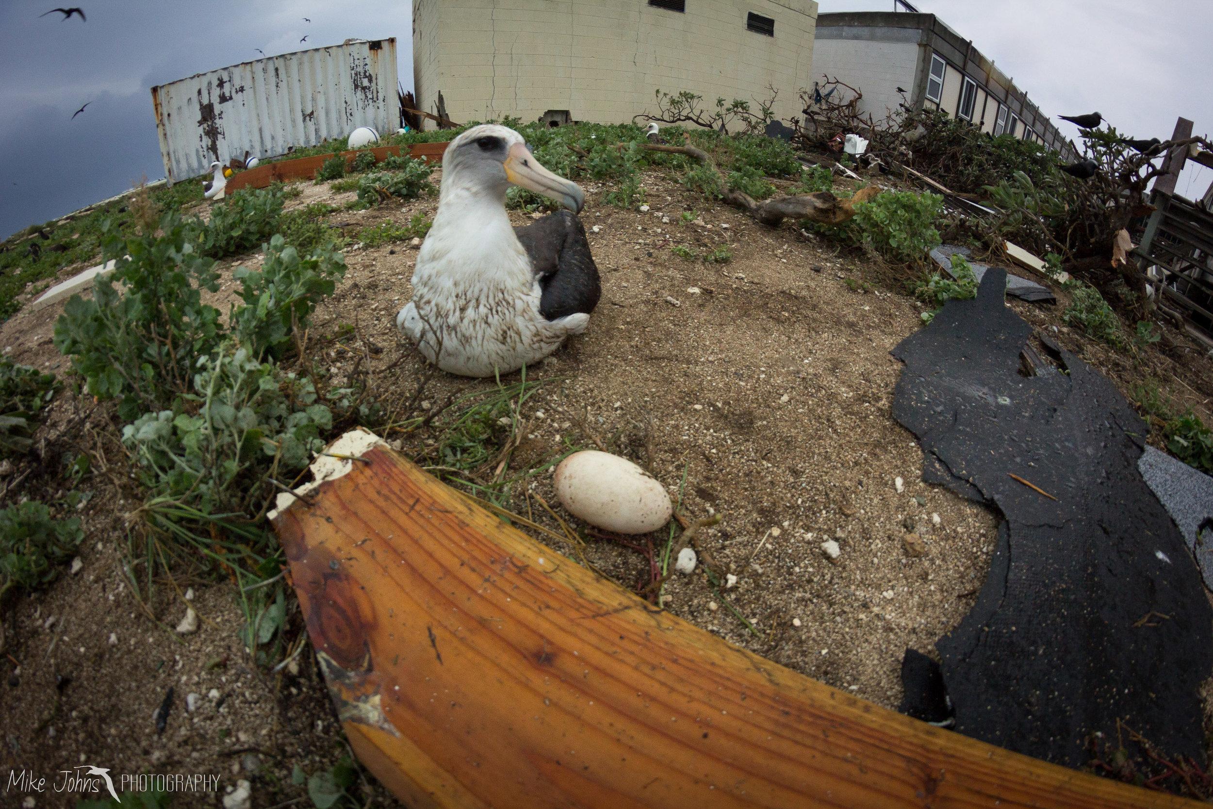tern2012-0538.jpg