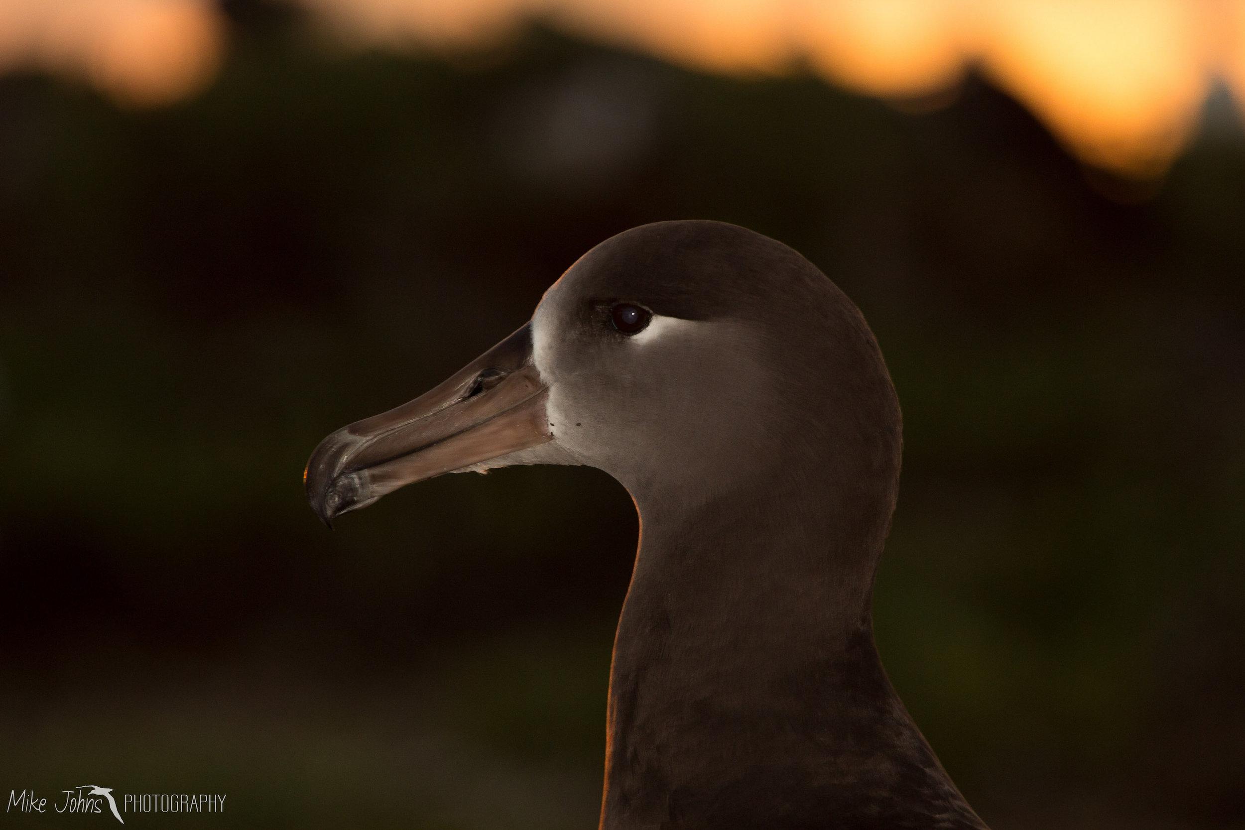 tern2012-7618.jpg