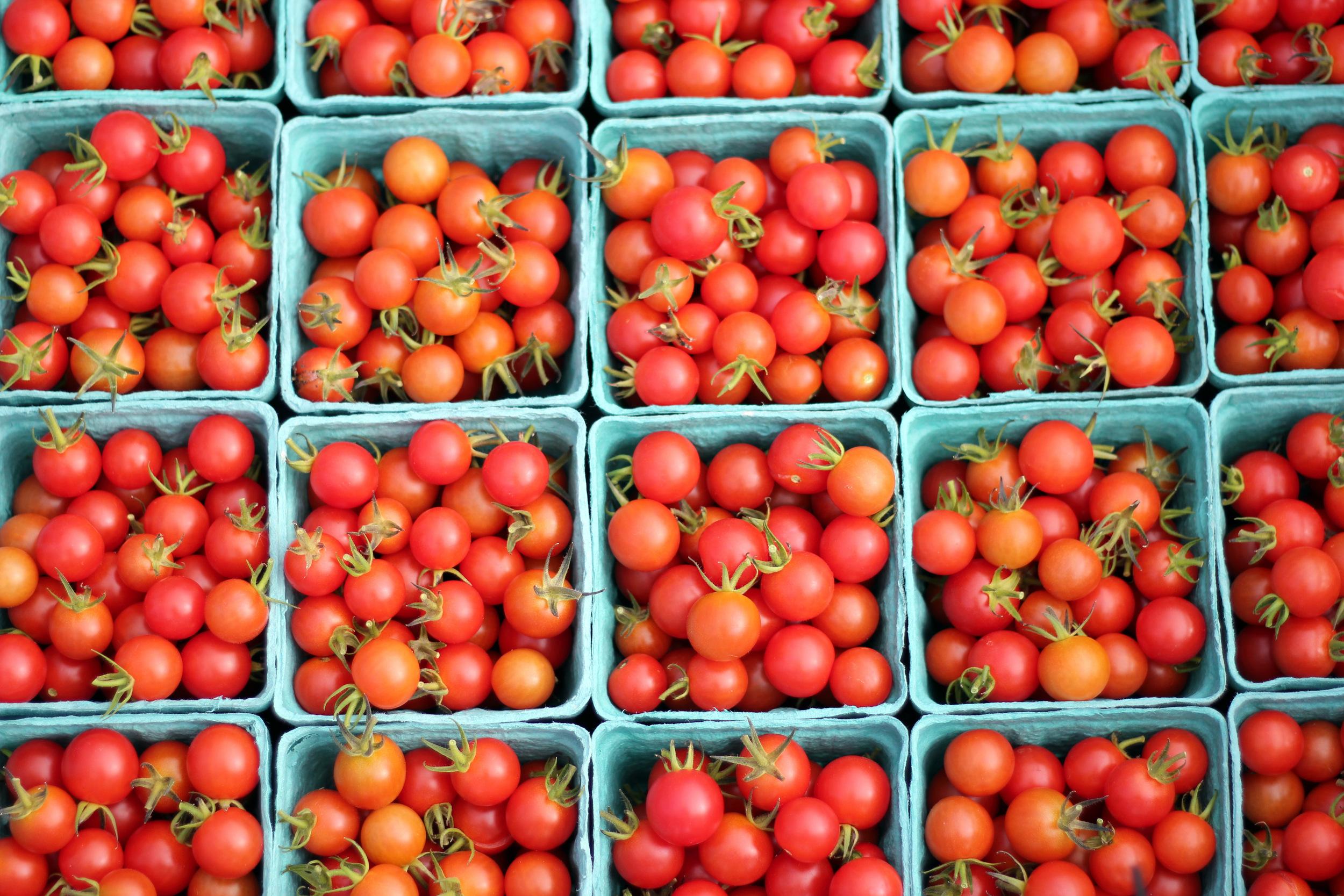 WF tomatoes.JPG