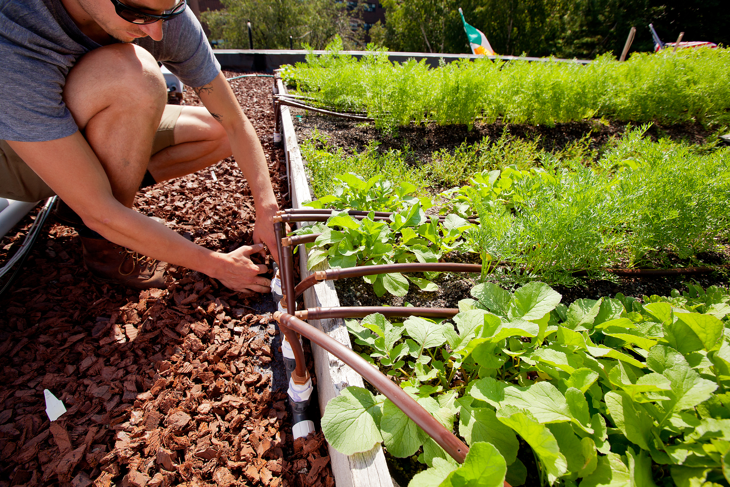 At Ester Restaurant Rooftop Farm, Netafim drip irrigation lines maximize watering efficiency, and recycled rubber mulch in vegetation-free zones slows rainwater runoff .
