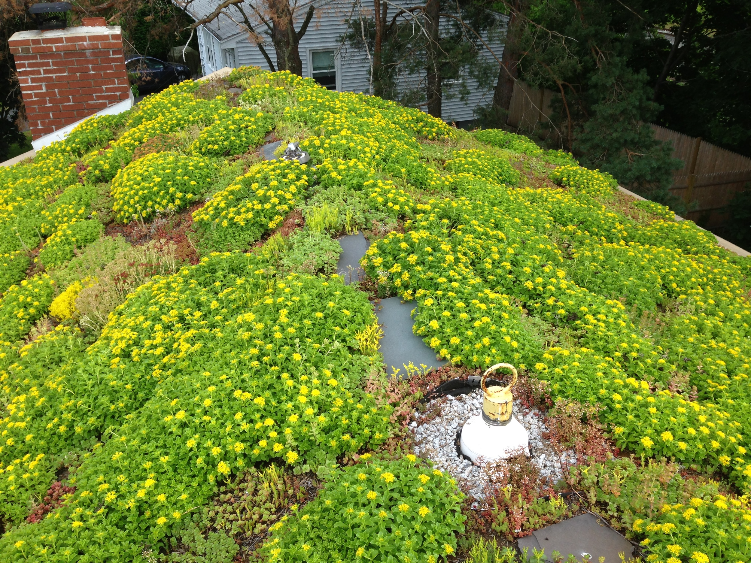 Recover-Green-Roofs-Residential-Green-Roof-Ranch-2