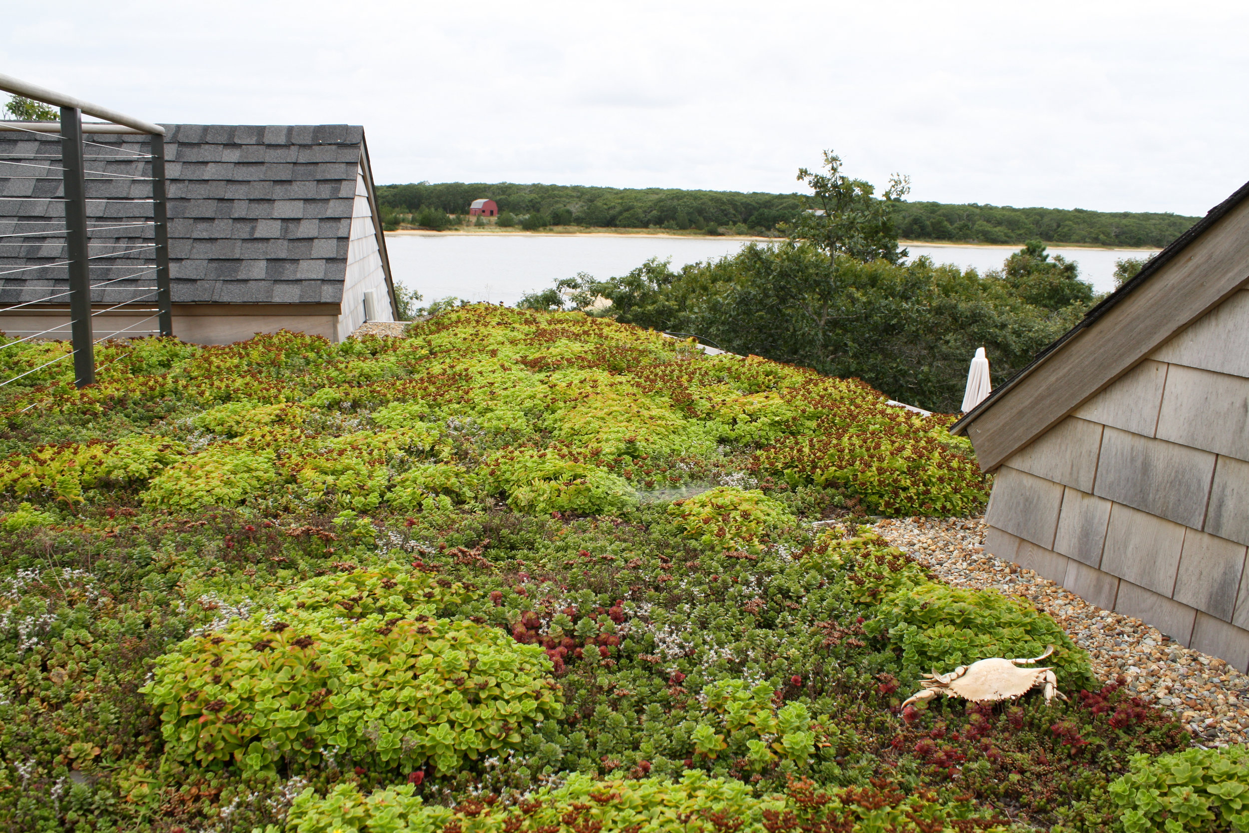 Recover-Green-Roofs-Residential-Green-Roof-Marthas-Vineyard-4