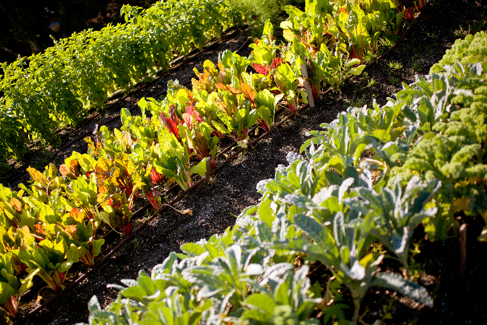 recover-green-roofs-rooftop-farm-ester-ledge-2010-6.jpg