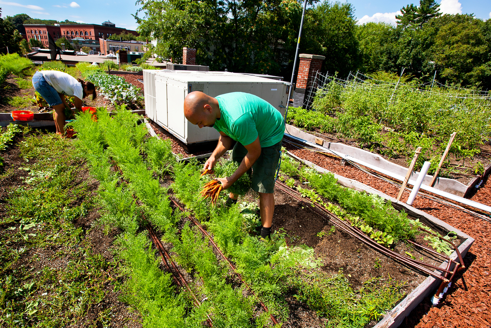 recover-green-roofs-rooftop-farm-ester-ledge-2010-7.jpg