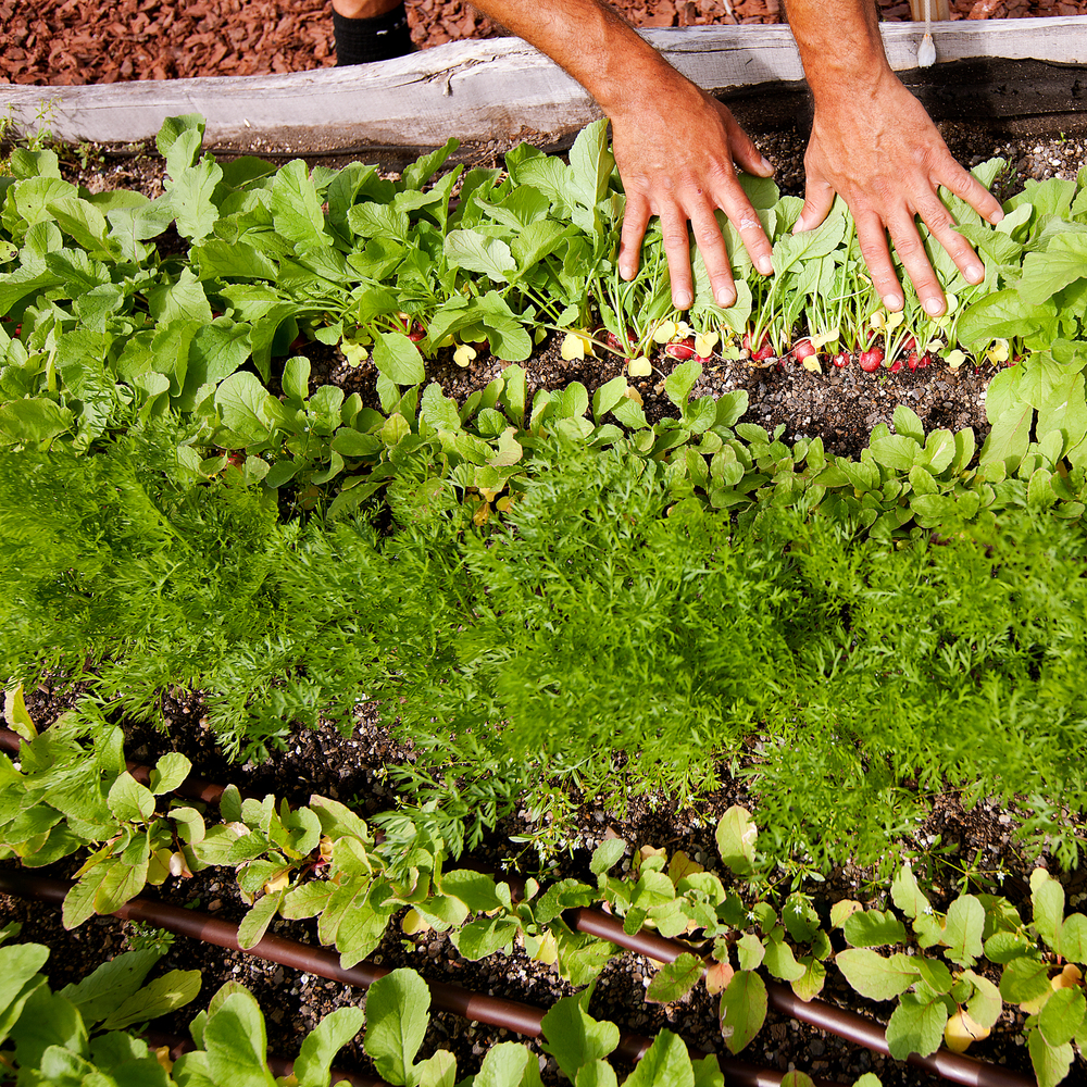 recover-green-roofs-rooftop-farm-ester-ledge-2010-10.jpg