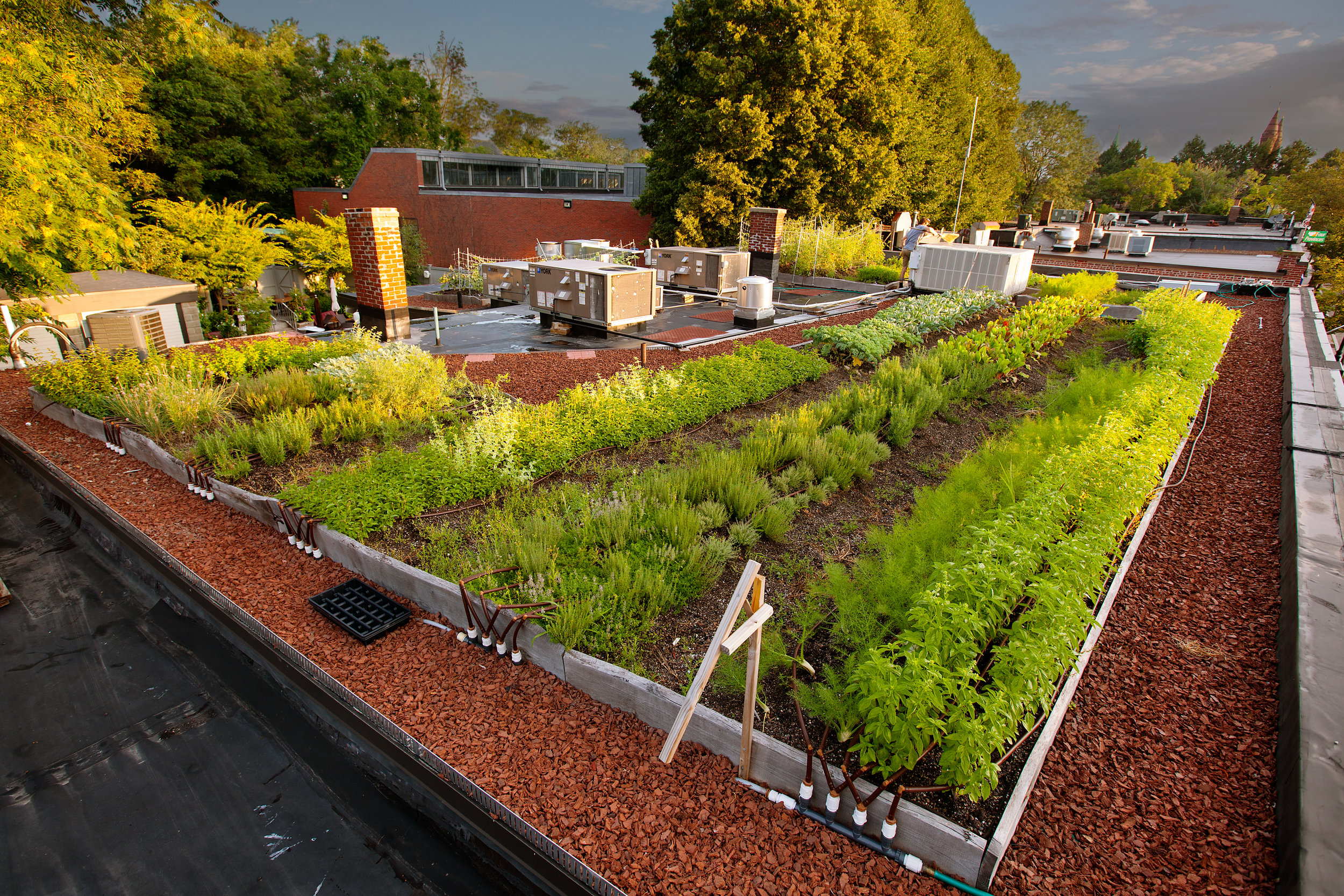 recover-green-roofs-rooftop-farm-ester-ledge-2010-11.jpg