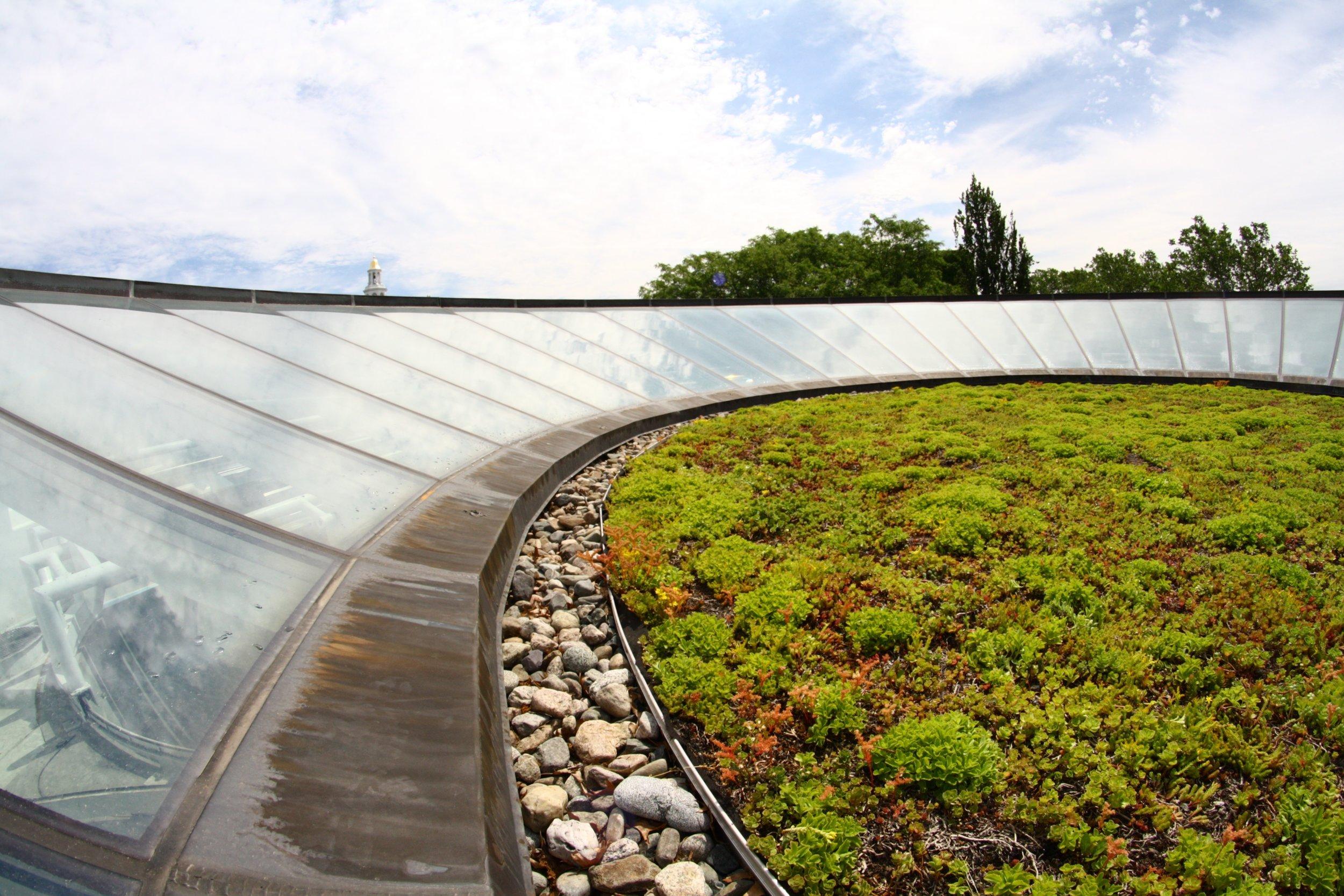 recover-green-roofs-harvard-business-school-garden-2016-9.jpg