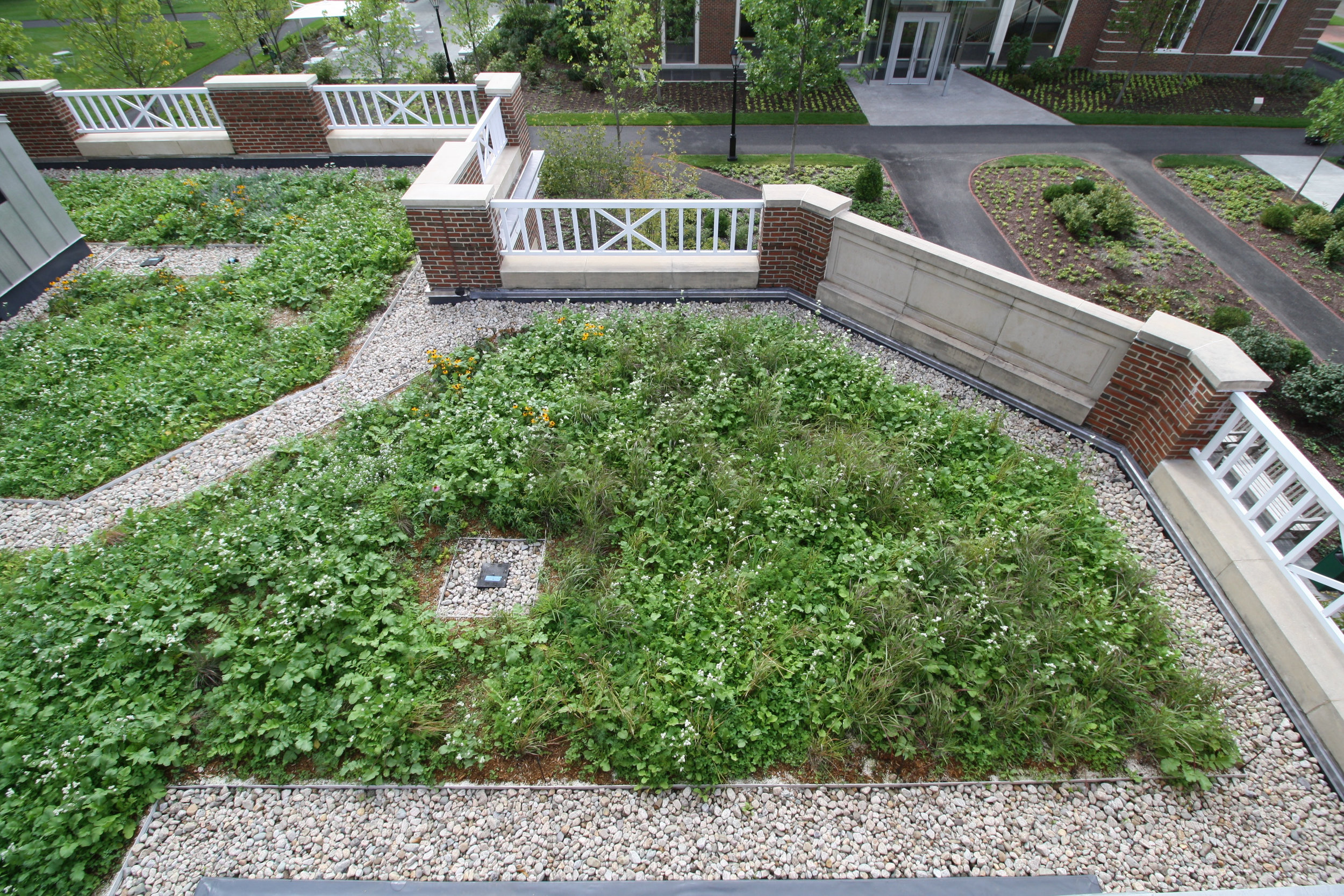 recover-green-roofs-harvard-business-school-garden-2017-9.jpg