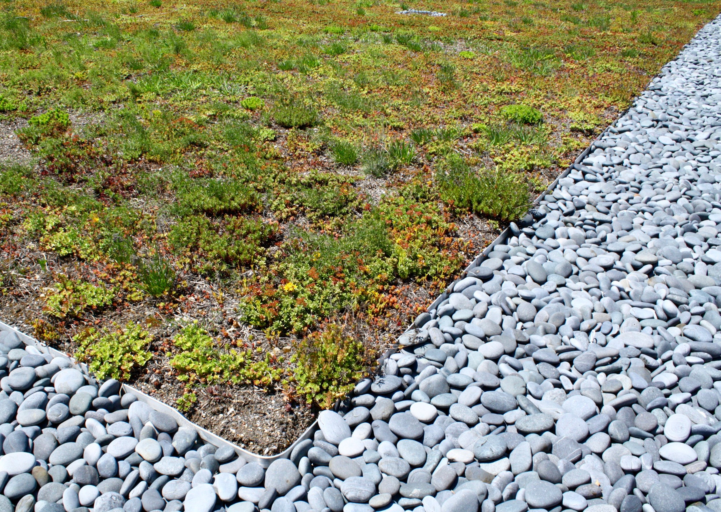recover-green-roofs-north-shore-cc-2014-4.jpg