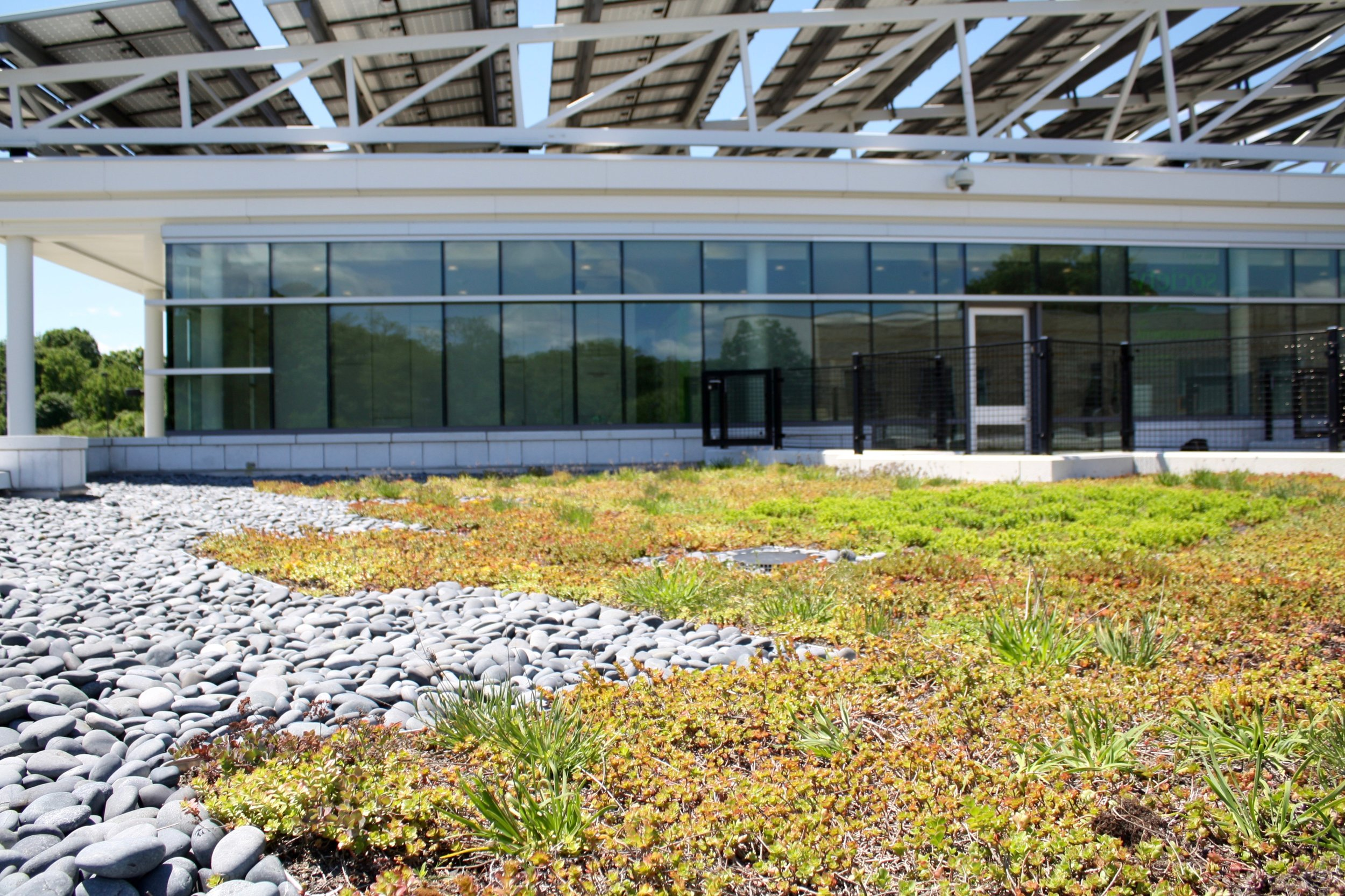 recover-green-roofs-north-shore-cc-2014-7.jpg