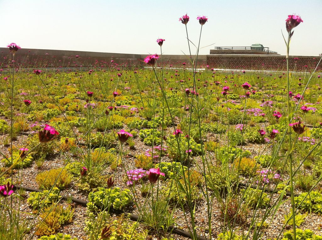 recover-green-roofs-public-school-roof-NYC-2010-11.jpeg